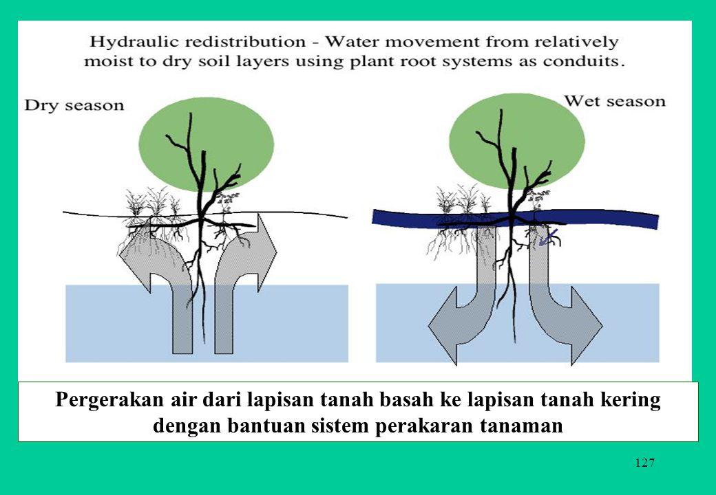 127 Pergerakan air dari lapisan tanah basah ke lapisan tanah kering dengan bantuan sistem perakaran tanaman