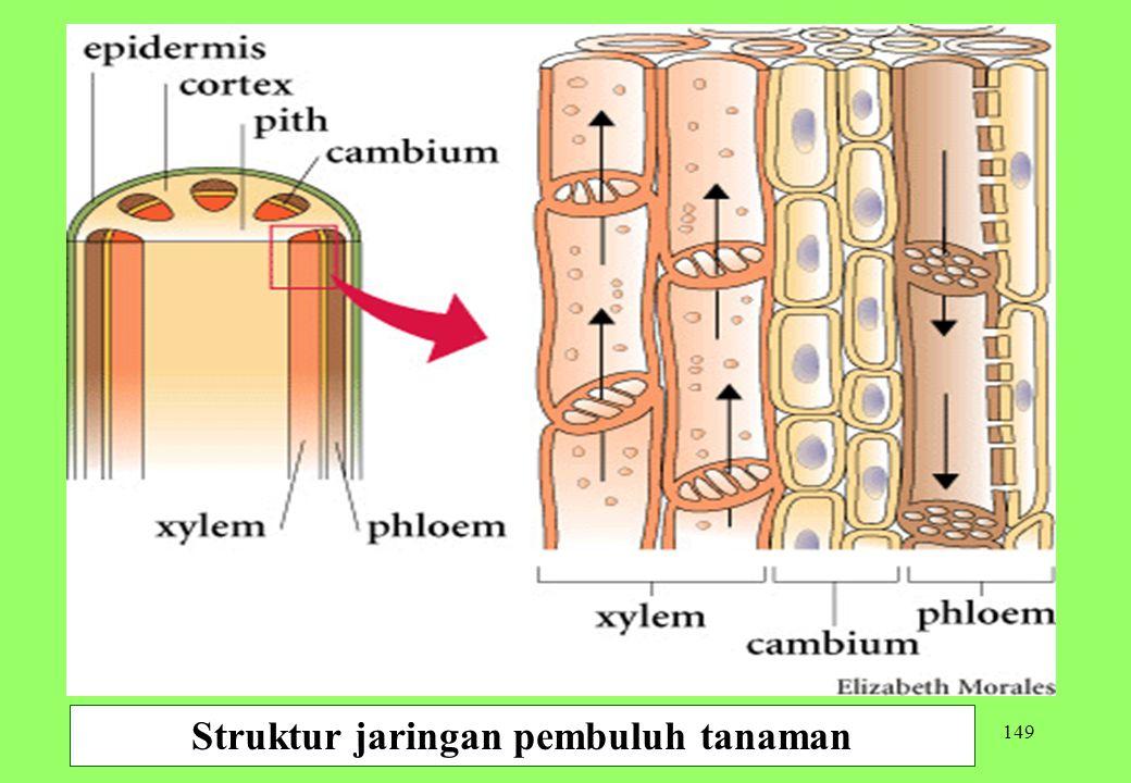 149 Struktur jaringan pembuluh tanaman