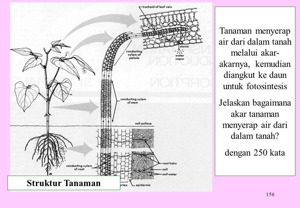 156 Struktur Tanaman Tanaman menyerap air dari dalam tanah melalui akar- akarnya, kemudian diangkut ke daun untuk fotosintesis Jelaskan bagaimana akar