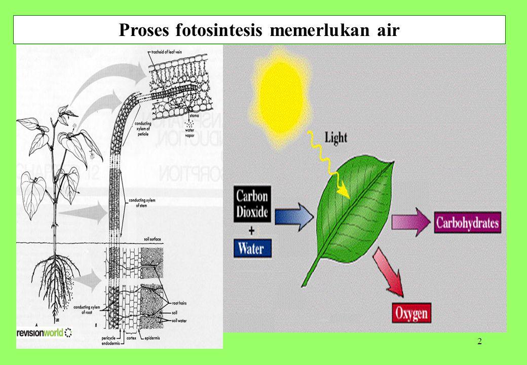2 Proses fotosintesis memerlukan air