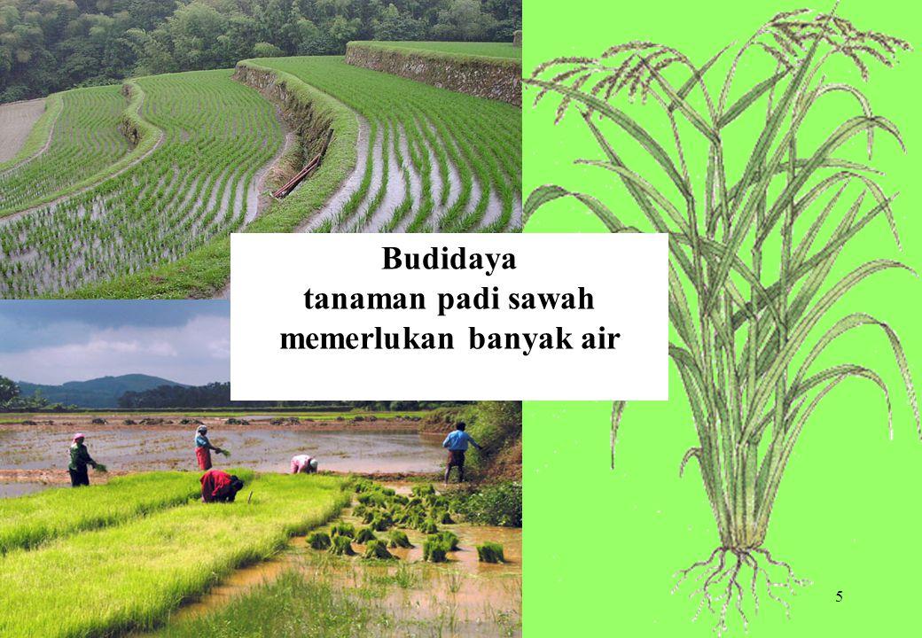 5 Budidaya tanaman padi sawah memerlukan banyak air