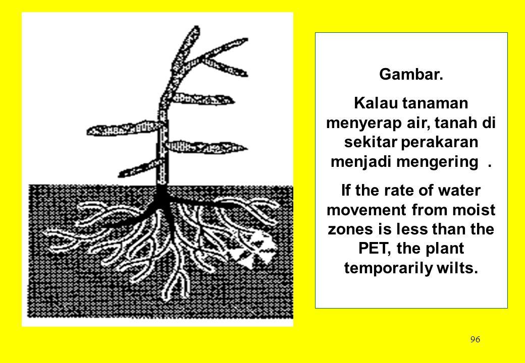 96 Gambar. Kalau tanaman menyerap air, tanah di sekitar perakaran menjadi mengering. If the rate of water movement from moist zones is less than the P