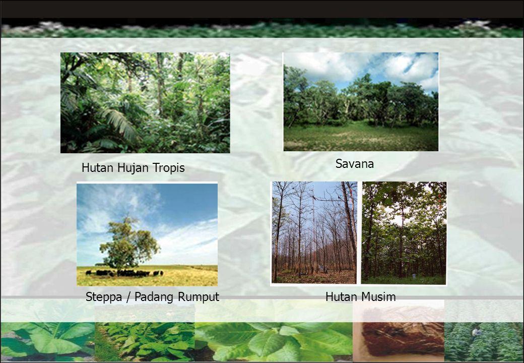20 2. Geologi dan Geomorfologi Keadaan geologi dan geomorfologi mempengaruhi pembentukan dan sifat-sifat tanah serta penyebaran dan hidup tumbuh-tumbu