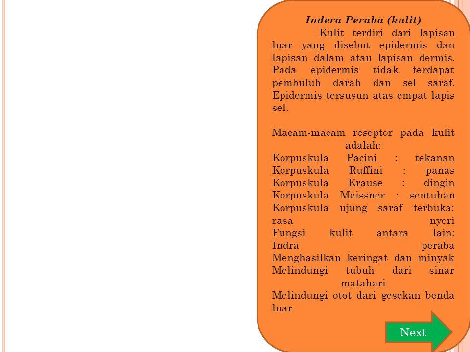 Indera Peraba (kulit) Kulit terdiri dari lapisan luar yang disebut epidermis dan lapisan dalam atau lapisan dermis. Pada epidermis tidak terdapat pemb