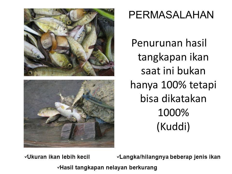 Penurunan hasil tangkapan ikan saat ini bukan hanya 100% tetapi bisa dikatakan 1000% (Kuddi) Ukuran ikan lebih kecil PERMASALAHAN Langka/hilangnya beberap jenis ikan Hasil tangkapan nelayan berkurang