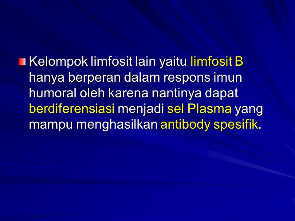 Kelompok limfosit lain yaitu limfosit B hanya berperan dalam respons imun humoral oleh karena nantinya dapat berdiferensiasi menjadi sel Plasma yang m