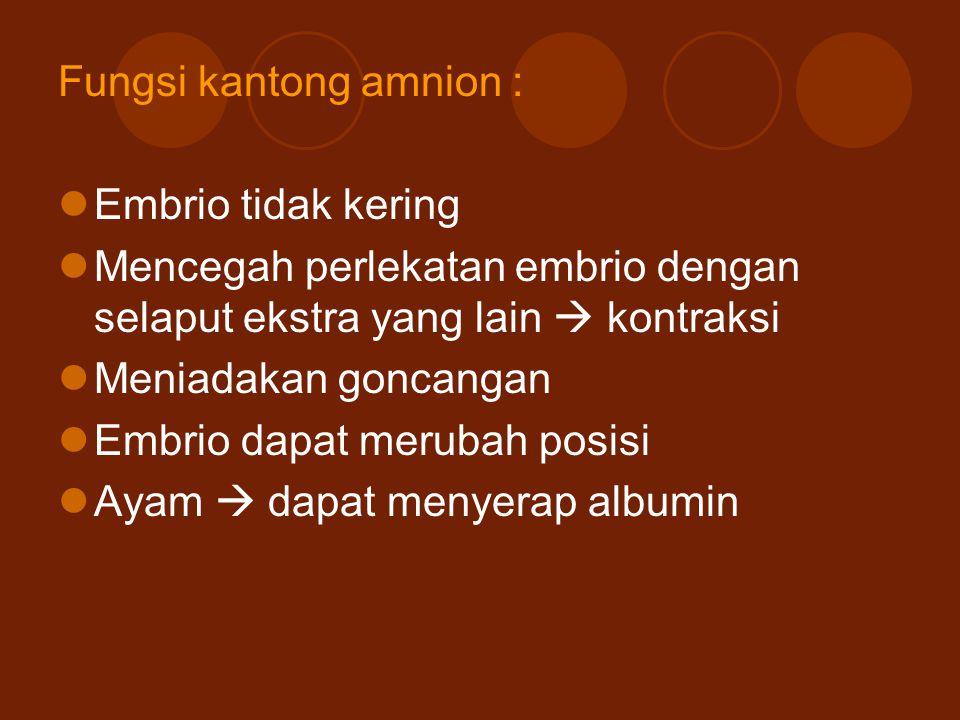 Fungsi kantong amnion : Embrio tidak kering Mencegah perlekatan embrio dengan selaput ekstra yang lain  kontraksi Meniadakan goncangan Embrio dapat m