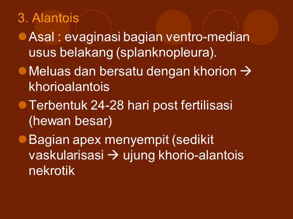 3. Alantois Asal : evaginasi bagian ventro-median usus belakang (splanknopleura). Meluas dan bersatu dengan khorion  khorioalantois Terbentuk 24-28 h