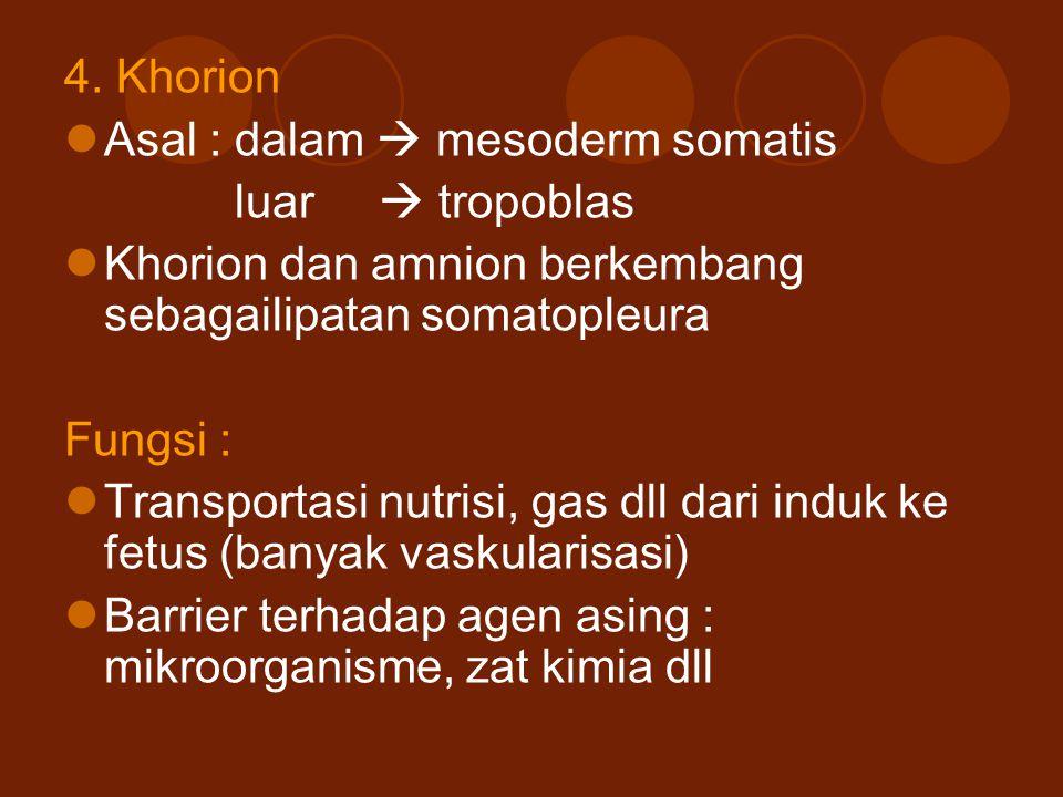 4. Khorion Asal : dalam  mesoderm somatis luar  tropoblas Khorion dan amnion berkembang sebagailipatan somatopleura Fungsi : Transportasi nutrisi, g