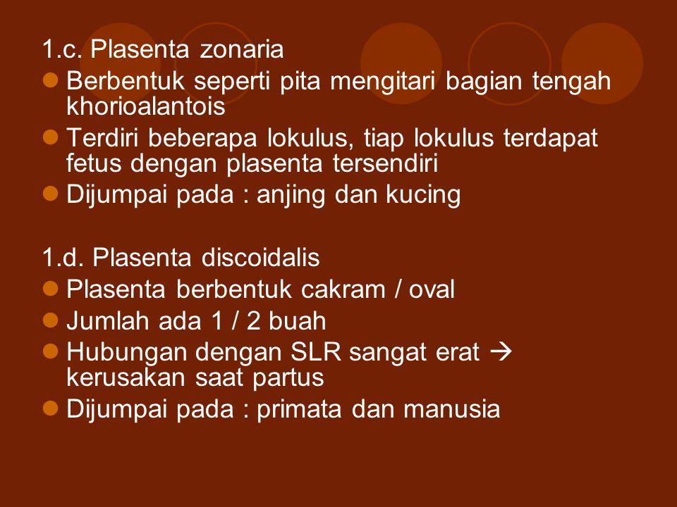 1.c. Plasenta zonaria Berbentuk seperti pita mengitari bagian tengah khorioalantois Terdiri beberapa lokulus, tiap lokulus terdapat fetus dengan plase