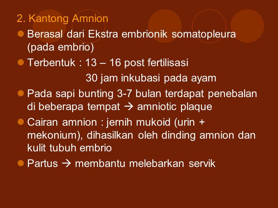 2. Kantong Amnion Berasal dari Ekstra embrionik somatopleura (pada embrio) Terbentuk : 13 – 16 post fertilisasi 30 jam inkubasi pada ayam Pada sapi bu
