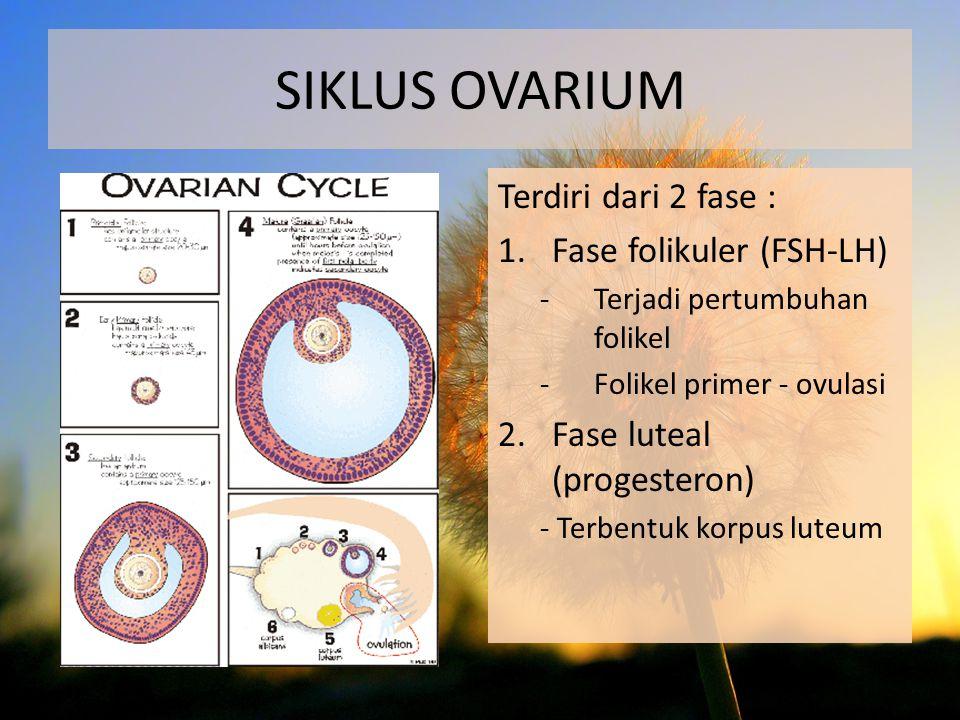 Terdiri dari 2 fase : 1.Fase folikuler (FSH-LH) -Terjadi pertumbuhan folikel -Folikel primer - ovulasi 2.Fase luteal (progesteron) - Terbentuk korpus