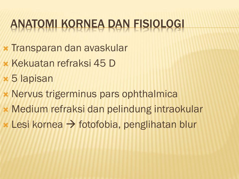  Transparan dan avaskular  Kekuatan refraksi 45 D  5 lapisan  Nervus trigerminus pars ophthalmica  Medium refraksi dan pelindung intraokular  Le
