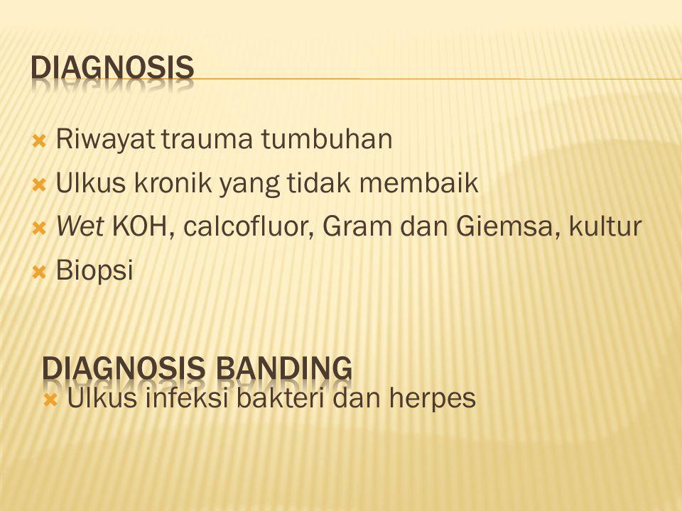  Riwayat trauma tumbuhan  Ulkus kronik yang tidak membaik  Wet KOH, calcofluor, Gram dan Giemsa, kultur  Biopsi  Ulkus infeksi bakteri dan herpes