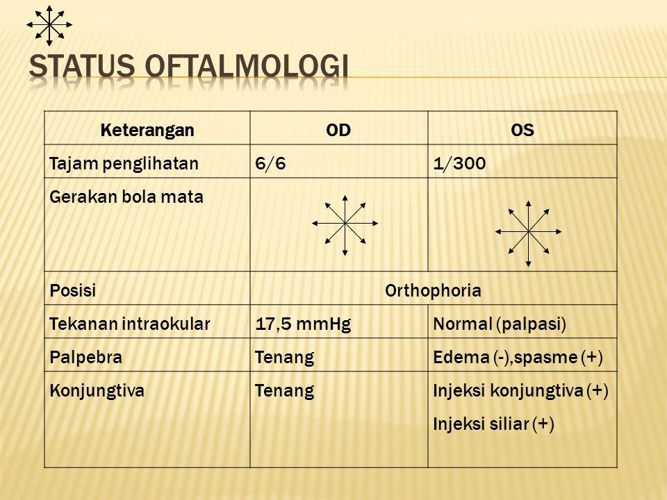 KorneaJernih Ulkus sentral ukuran 4x1,5mm, >2/3 stroma, feathery edge (+), infiltrat (+), keruh Bilik mata depan Dalam Relatif dangkal, sel dan flare sulit dinilai, hipopion Iris dan pupil Bulat, sentral, refleks cahaya baik LensaJernihSamar jernih VitreousJernihSulit dinilai FunduskopiPapil bulat dan batas tegas, cup- disk ratio 0,3, aa/vv 2/3 Sulit dinilai