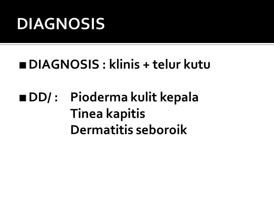 DIAGNOSIS : klinis + telur kutu DD/ : Pioderma kulit kepala Tinea kapitis Dermatitis seboroik