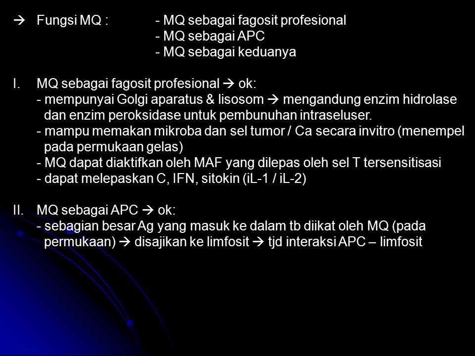  Fungsi MQ : - MQ sebagai fagosit profesional - MQ sebagai APC - MQ sebagai keduanya I.MQ sebagai fagosit profesional  ok: - mempunyai Golgi aparatu