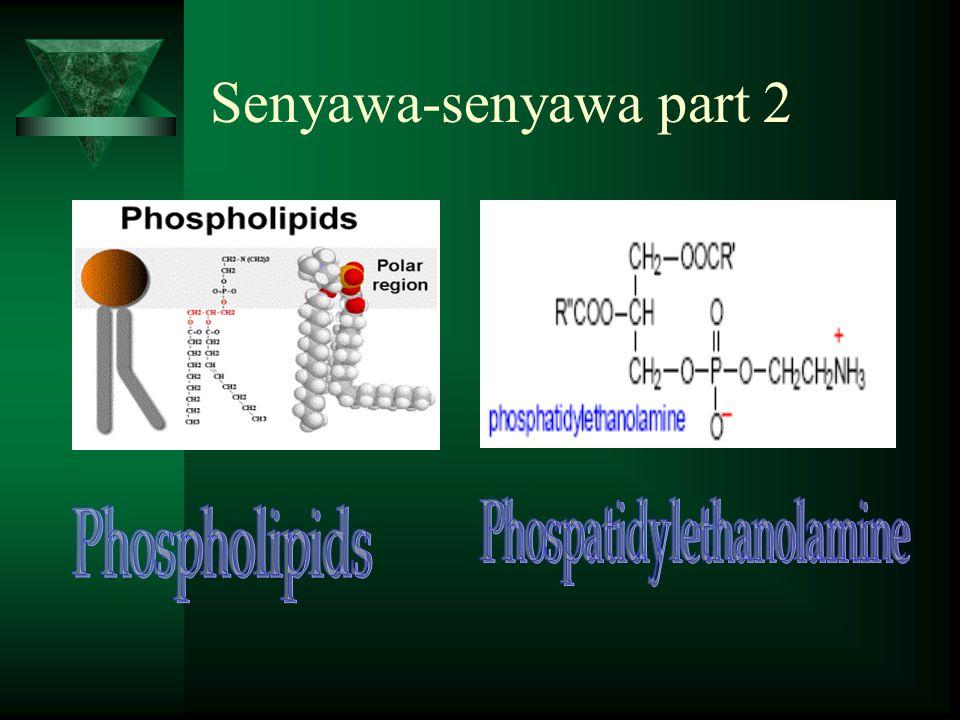 Senyawa-senyawa part 2