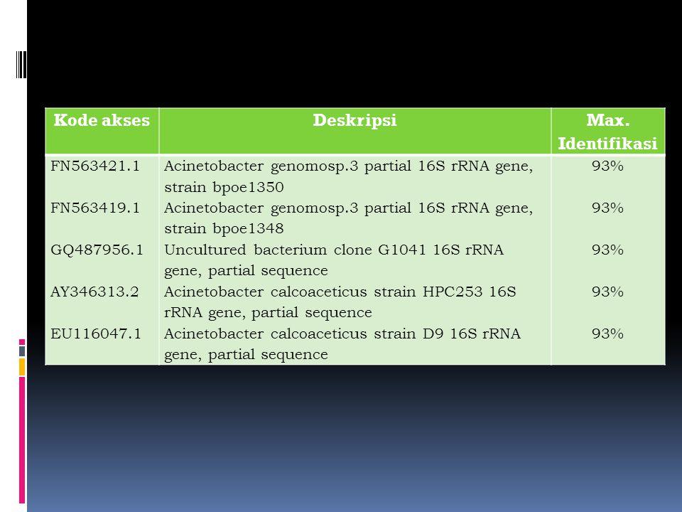 Kode aksesDeskripsi Max. Identifikasi FN563421.1 FN563419.1 GQ487956.1 AY346313.2 EU116047.1 Acinetobacter genomosp.3 partial 16S rRNA gene, strain bp