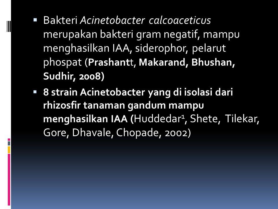  Bakteri Acinetobacter calcoaceticus merupakan bakteri gram negatif, mampu menghasilkan IAA, siderophor, pelarut phospat ( Prashantt, Makarand, Bhush