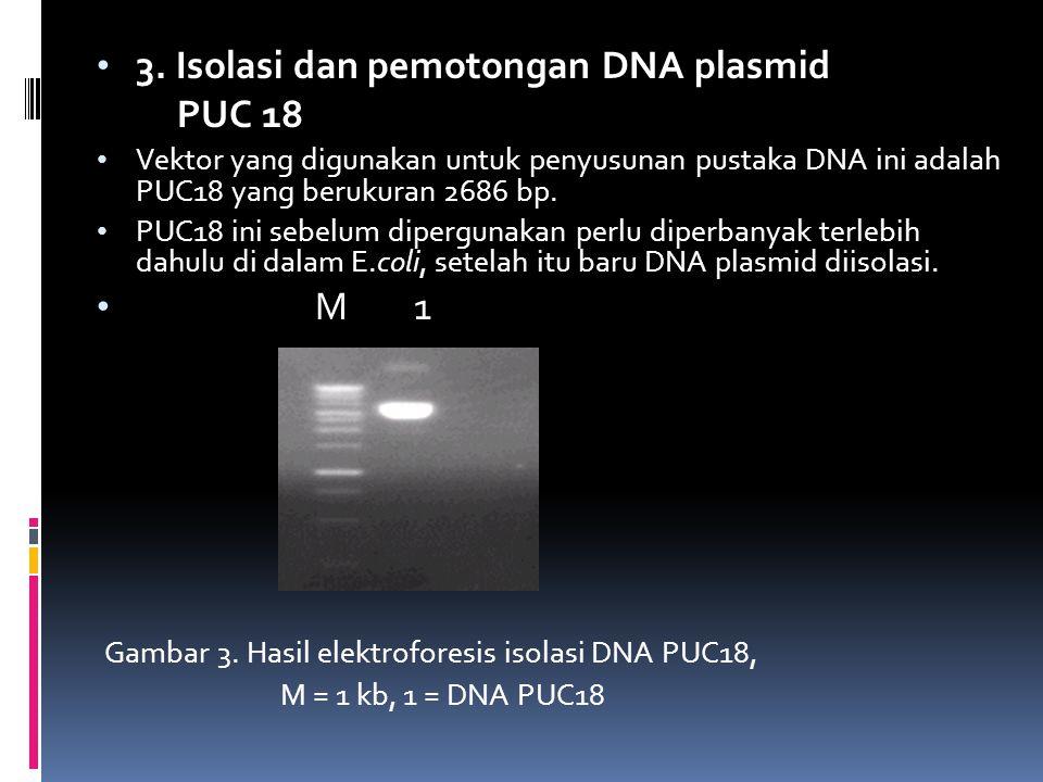 3. Isolasi dan pemotongan DNA plasmid PUC 18 Vektor yang digunakan untuk penyusunan pustaka DNA ini adalah PUC18 yang berukuran 2686 bp. PUC18 ini seb