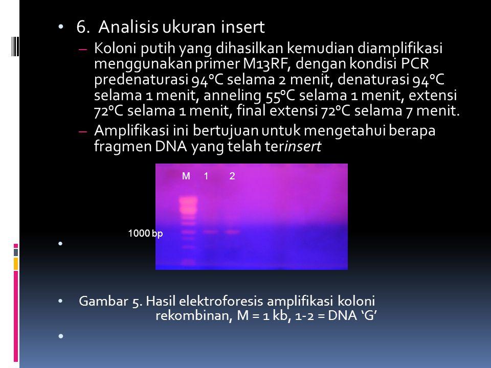 6. Analisis ukuran insert – Koloni putih yang dihasilkan kemudian diamplifikasi menggunakan primer M13RF, dengan kondisi PCR predenaturasi 94 0 C sela