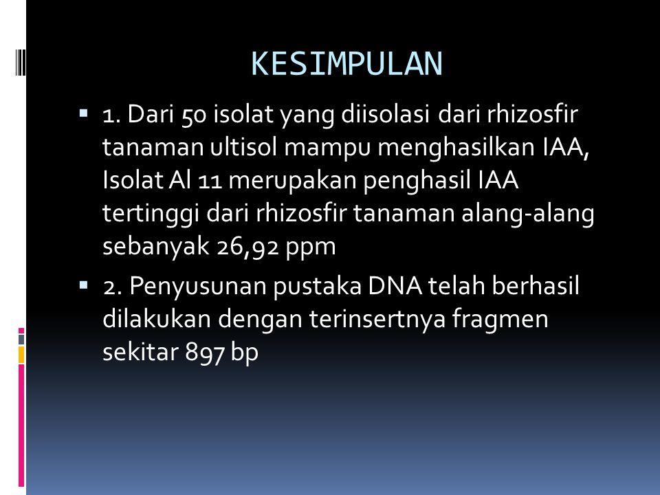 KESIMPULAN  1. Dari 50 isolat yang diisolasi dari rhizosfir tanaman ultisol mampu menghasilkan IAA, Isolat Al 11 merupakan penghasil IAA tertinggi da