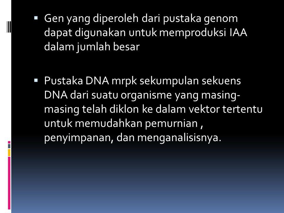  Gen yang diperoleh dari pustaka genom dapat digunakan untuk memproduksi IAA dalam jumlah besar  Pustaka DNA mrpk sekumpulan sekuens DNA dari suatu