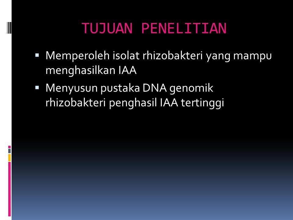 TUJUAN PENELITIAN  Memperoleh isolat rhizobakteri yang mampu menghasilkan IAA  Menyusun pustaka DNA genomik rhizobakteri penghasil IAA tertinggi