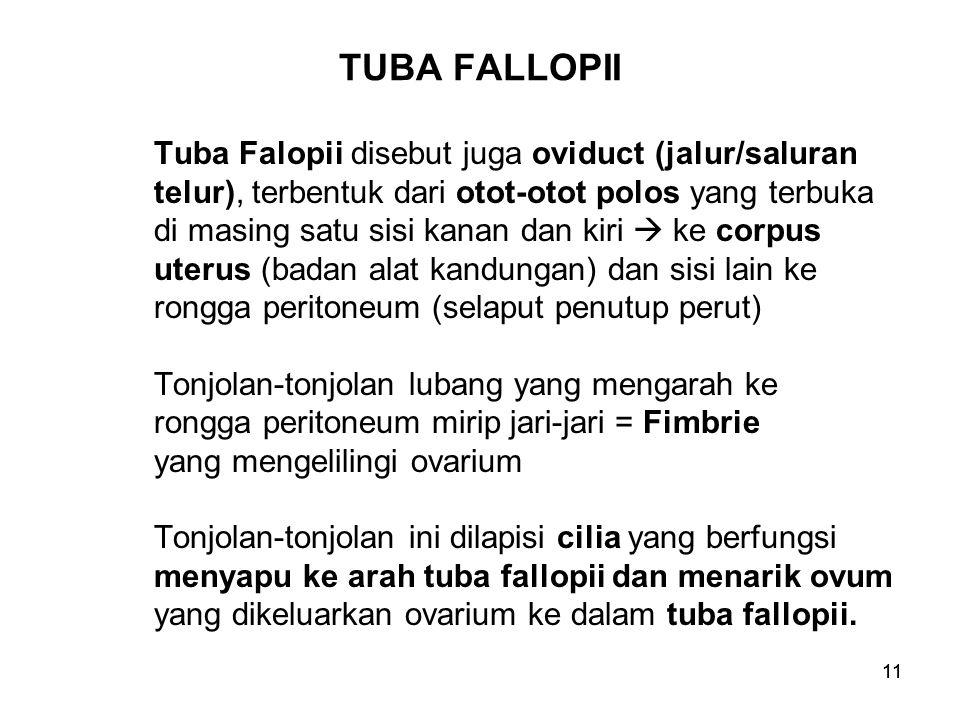 11 TUBA FALLOPII Tuba Falopii disebut juga oviduct (jalur/saluran telur), terbentuk dari otot-otot polos yang terbuka di masing satu sisi kanan dan ki