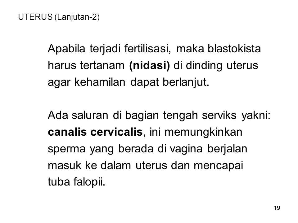 19 UTERUS (Lanjutan-2) Apabila terjadi fertilisasi, maka blastokista harus tertanam (nidasi) di dinding uterus agar kehamilan dapat berlanjut. Ada sal