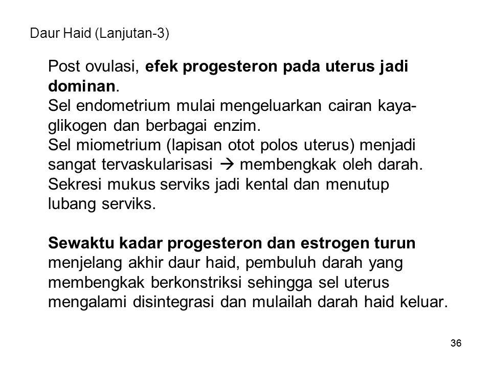 36 Daur Haid (Lanjutan-3) Post ovulasi, efek progesteron pada uterus jadi dominan. Sel endometrium mulai mengeluarkan cairan kaya- glikogen dan berbag