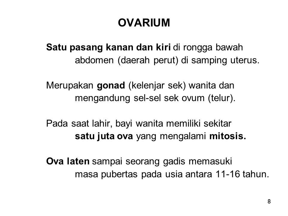 88 OVARIUM Satu pasang kanan dan kiri di rongga bawah abdomen (daerah perut) di samping uterus. Merupakan gonad (kelenjar sek) wanita dan mengandung s
