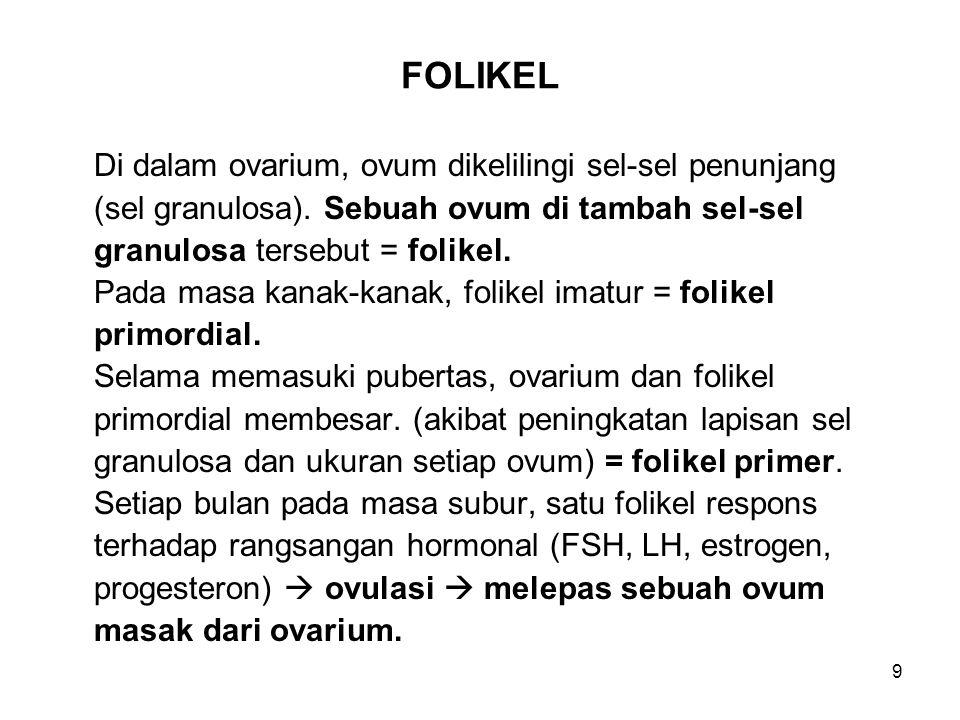 9 FOLIKEL Di dalam ovarium, ovum dikelilingi sel-sel penunjang (sel granulosa). Sebuah ovum di tambah sel-sel granulosa tersebut = folikel. Pada masa