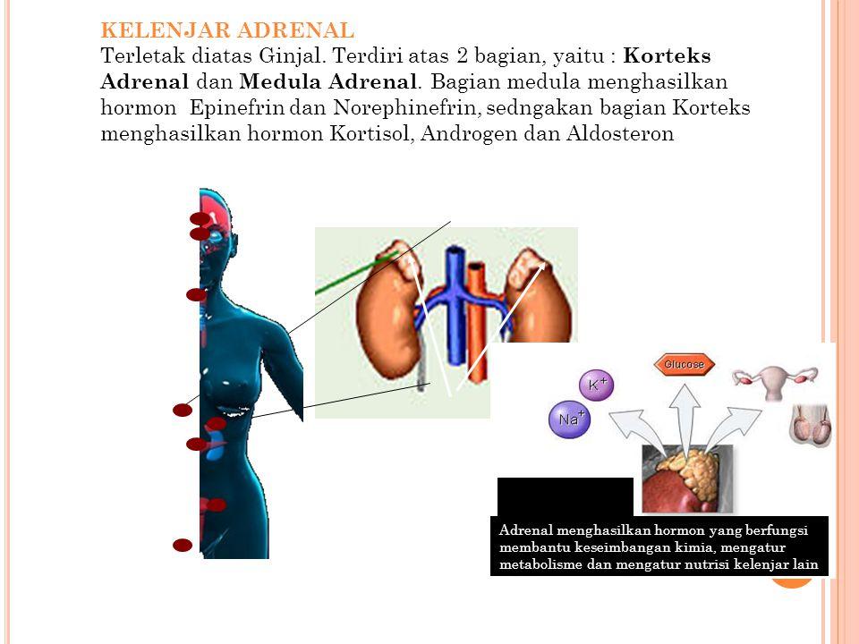 KELENJAR ADRENAL Terletak diatas Ginjal. Terdiri atas 2 bagian, yaitu : Korteks Adrenal dan Medula Adrenal. Bagian medula menghasilkan hormon Epinefri