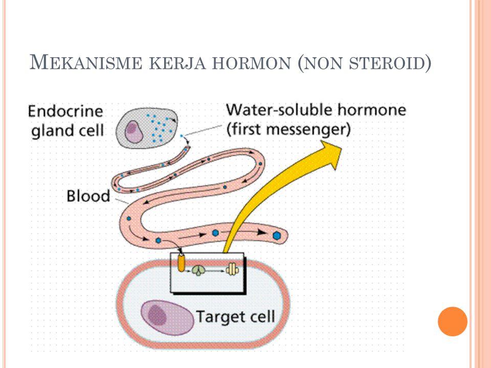 M EKANISME KERJA HORMON ( NON STEROID )