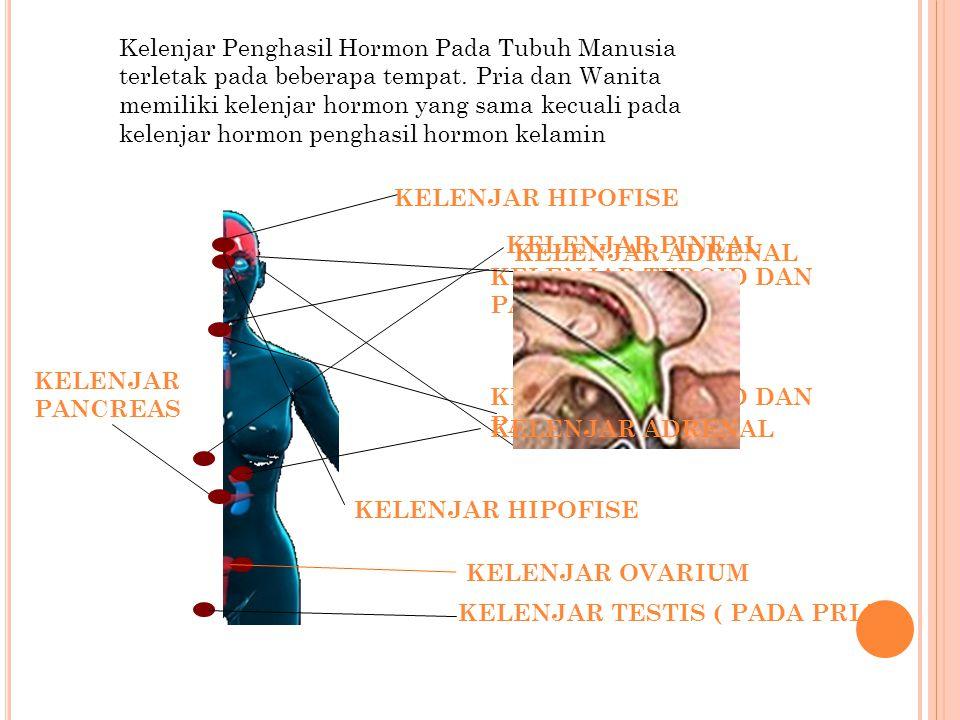 Kelenjar Penghasil Hormon Pada Tubuh Manusia terletak pada beberapa tempat. Pria dan Wanita memiliki kelenjar hormon yang sama kecuali pada kelenjar h