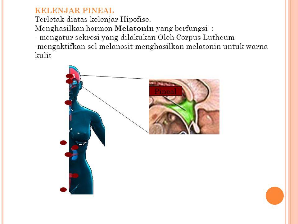 KELENJAR PINEAL Terletak diatas kelenjar Hipofise. Menghasilkan hormon Melatonin yang berfungsi : - mengatur sekresi yang dilakukan Oleh Corpus Lutheu