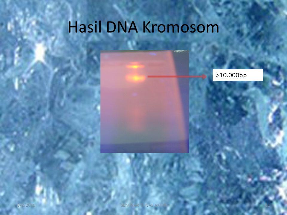 Hasil DNA Kromosom 9/2/201011SEMINAR TUGAS AKHIR >10.000bp