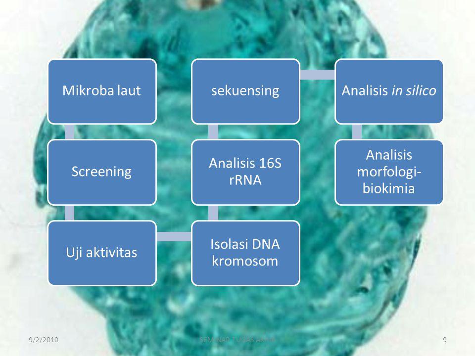 9/2/20109SEMINAR TUGAS AKHIR Mikroba lautScreeningUji aktivitas Isolasi DNA kromosom Analisis 16S rRNA sekuensingAnalisis in silico Analisis morfologi