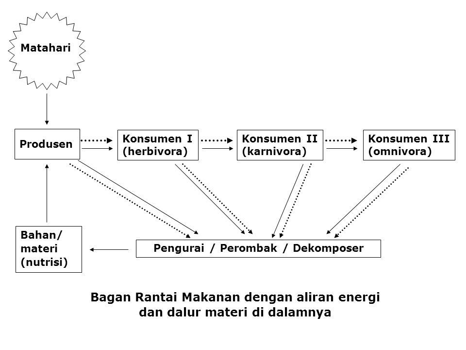 Bagan Rantai Makanan dengan aliran energi dan dalur materi di dalamnya Matahari Produsen Konsumen I (herbivora) Konsumen II (karnivora) Konsumen III (