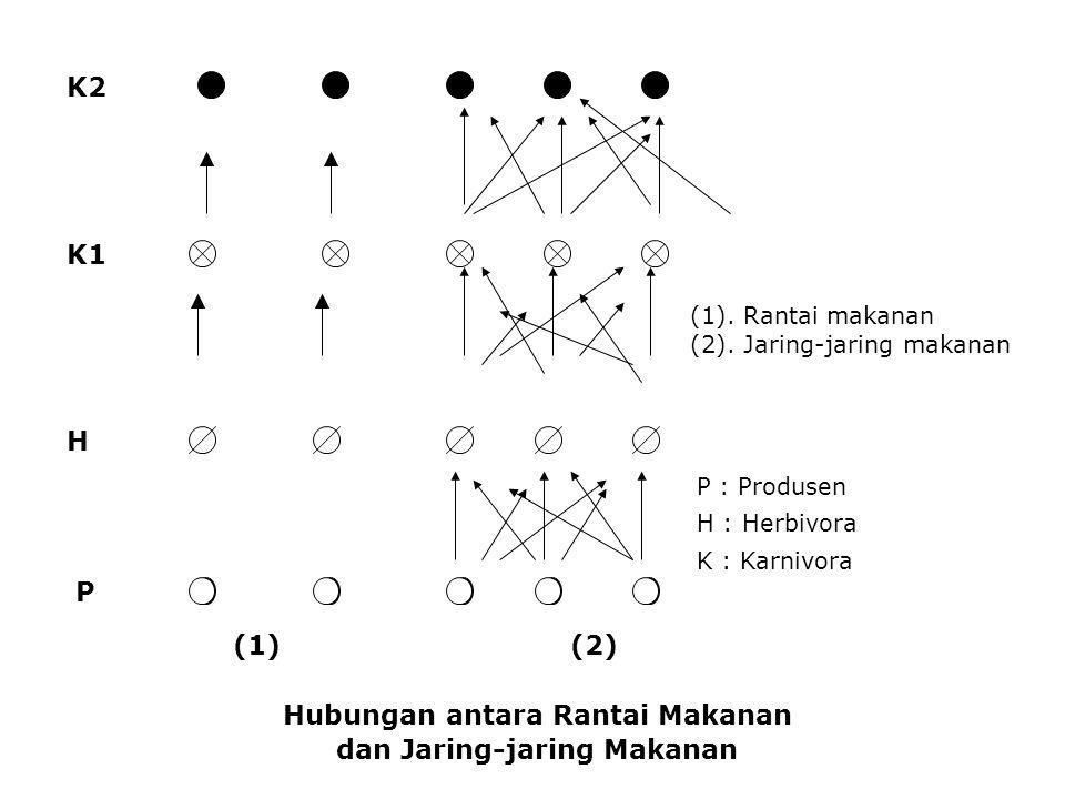 Hubungan antara Rantai Makanan dan Jaring-jaring Makanan K2 K1 H P (1). Rantai makanan (2). Jaring-jaring makanan P : Produsen H : Herbivora K : Karni