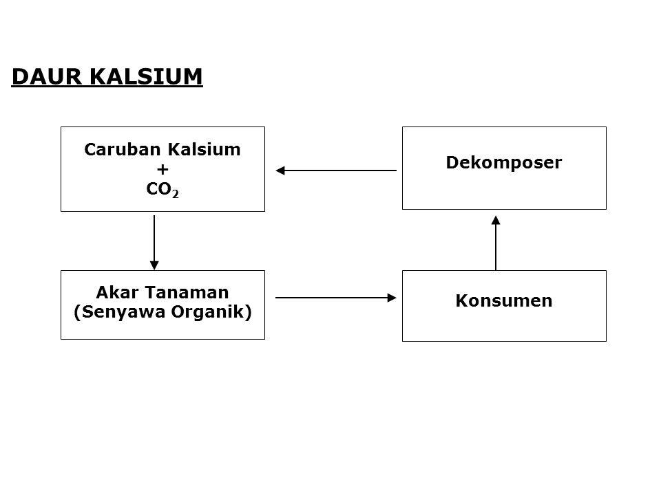 DAUR KALSIUM Caruban Kalsium + CO 2 Akar Tanaman (Senyawa Organik) Dekomposer Konsumen