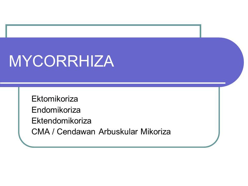 MYCORRHIZA Ektomikoriza Endomikoriza Ektendomikoriza CMA / Cendawan Arbuskular Mikoriza