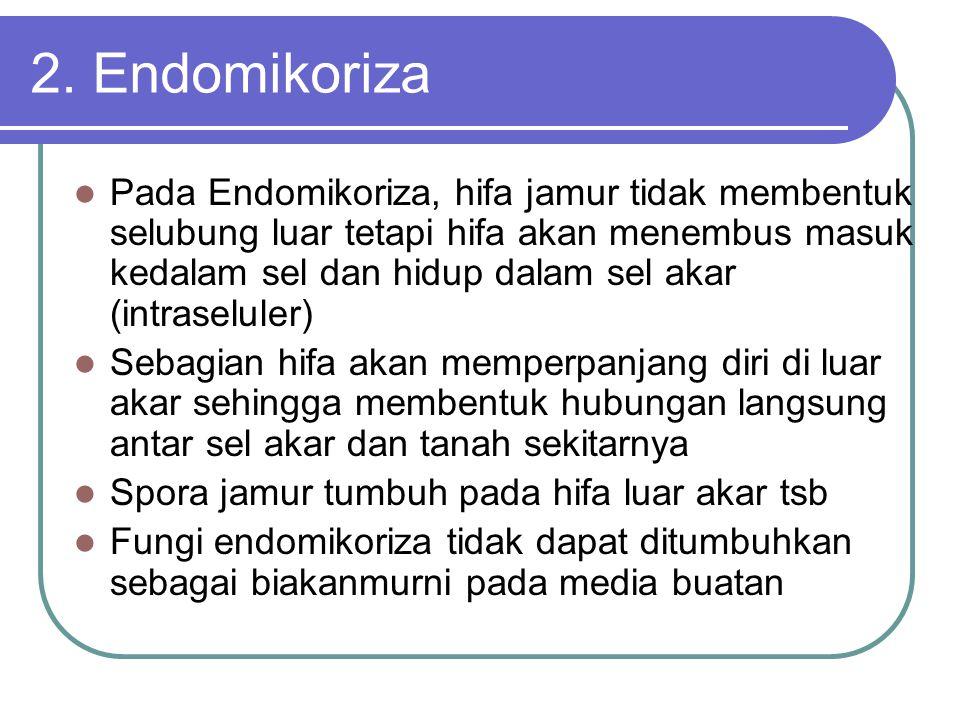 2. Endomikoriza Pada Endomikoriza, hifa jamur tidak membentuk selubung luar tetapi hifa akan menembus masuk kedalam sel dan hidup dalam sel akar (intr