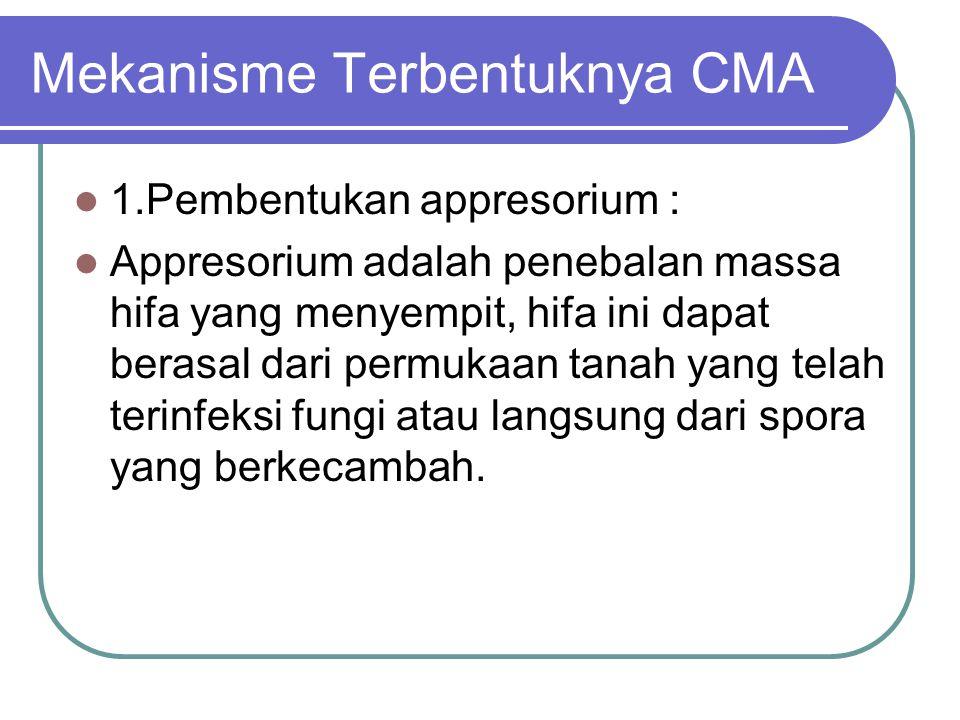 Mekanisme Terbentuknya CMA 1.Pembentukan appresorium : Appresorium adalah penebalan massa hifa yang menyempit, hifa ini dapat berasal dari permukaan t