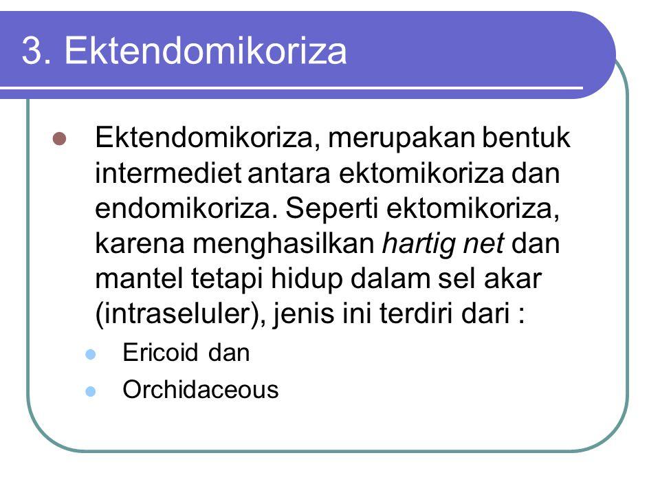 3. Ektendomikoriza Ektendomikoriza, merupakan bentuk intermediet antara ektomikoriza dan endomikoriza. Seperti ektomikoriza, karena menghasilkan harti