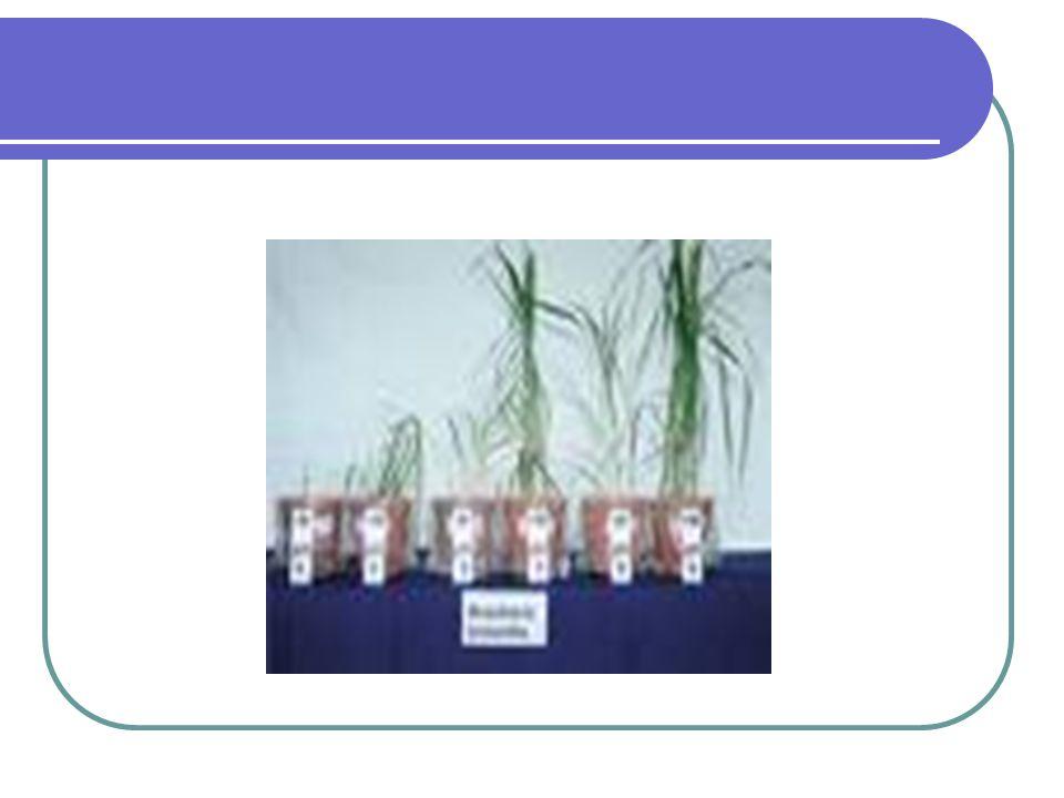 Keuntungan timbal balik Mikoriza memanfaatkan sekresi akar tanaman atau zat-zat yang dikeluarkan akar tanaman karena mengandung gula sebagai sumber karbon dan unsur hasil fotosintesa yang digunakan untuk pertumbuhan fungi