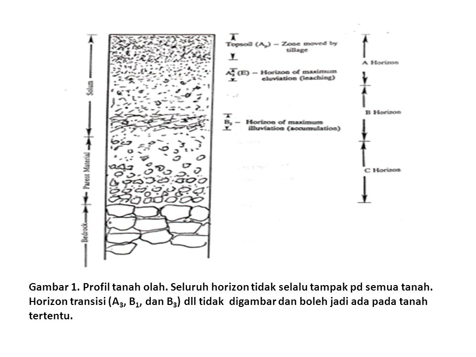 Gambar 1. Profil tanah olah. Seluruh horizon tidak selalu tampak pd semua tanah. Horizon transisi (A 3, B 1, dan B 3 ) dll tidak digambar dan boleh ja