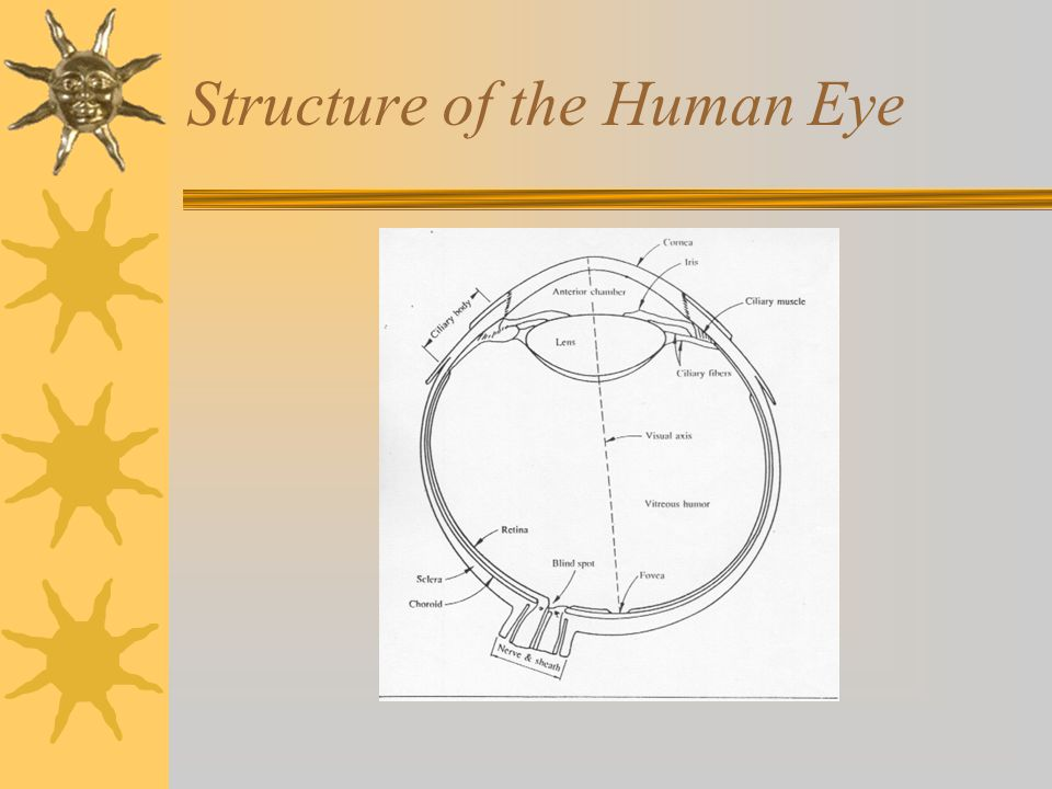 Structure of the Human Eye